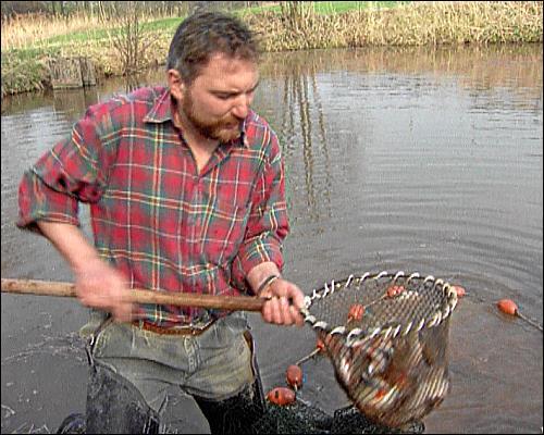 In Heiner Sindels Gasthaus kommt der Fisch aus dem eigenen Weiher frisch auf den Tisch