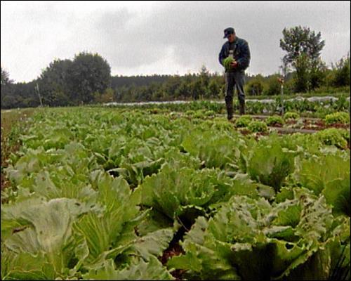 Biobauer bei der Ernte