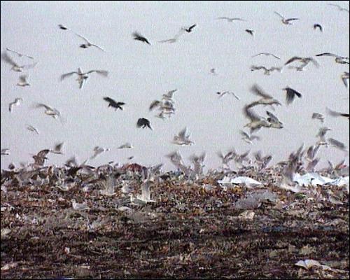 Eine inzwischen stillgelegte Mülldeponie in Mittelfranken