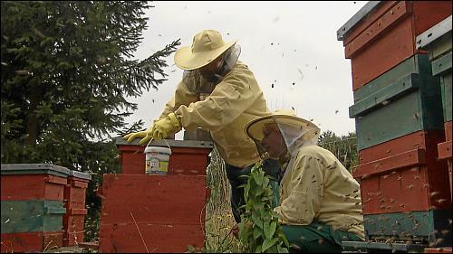 Fünf Mitarbeiter betreuen seit 2010 die Bienenvölker des Grünen Bereichs
