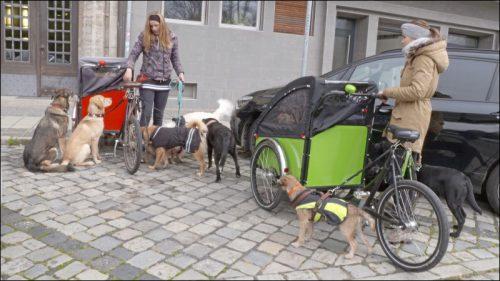 Den Hunden gefällt's: Gassi gehen mit dem »Christiana-Bike« stellt sich als pfiffige Geschäftsidee heraus.