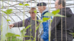 Auch das ist Bio: Produktion von Gemüse unter Glas ist im Knoblauchsland auf dem Vormarsch.