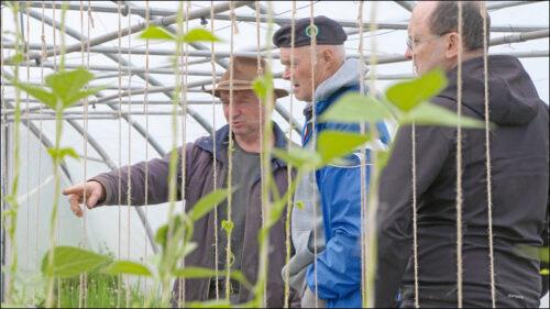 Bei der Solidarischen Landwirtschaft wird ein enges Verhältnis zwischen Erzeuger und Verbraucher aufgebaut. Hier weiß der Stadtbewohner, wo sein Gemüse wächst.